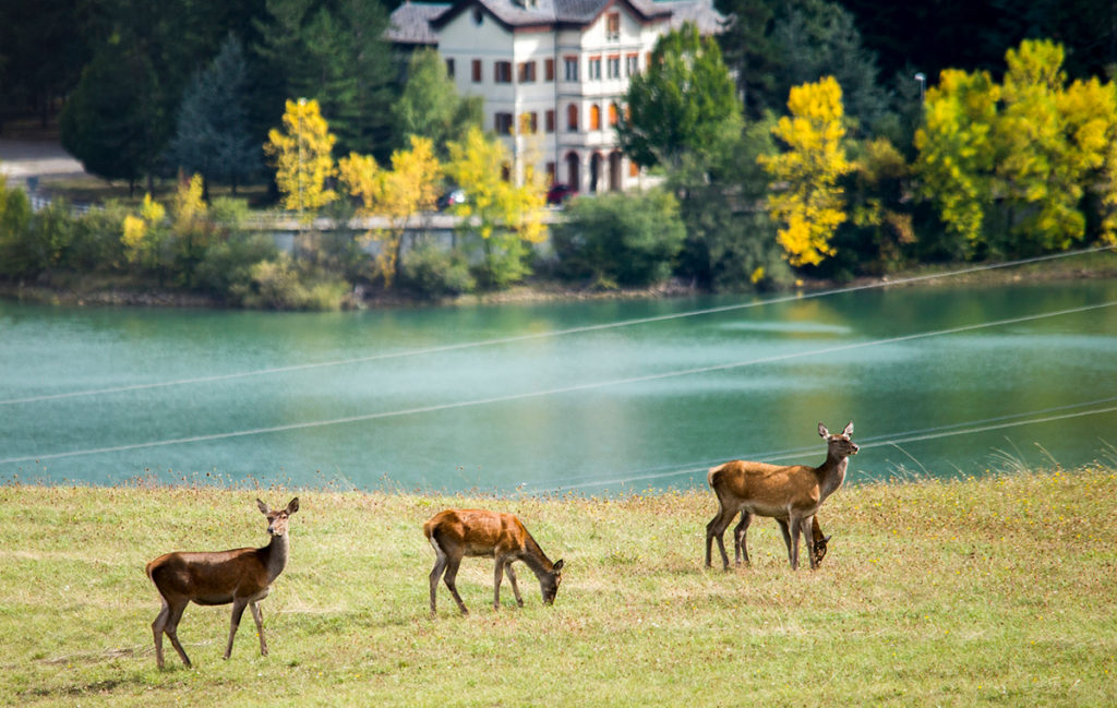 NATURAL PARK OF SUVIANA AND BRASIMONE LAKES | Discover Alto